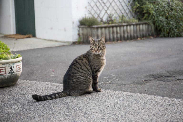 2548 CatTigger